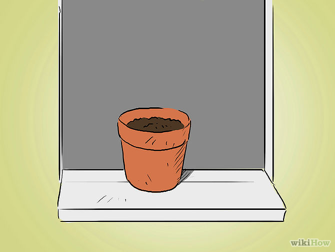 Grow an Apple Tree from a Seed Step 8 Version 2.jpg