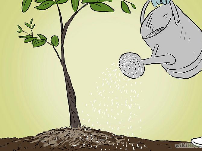 Grow an Apple Tree from a Seed Step 15.jpg