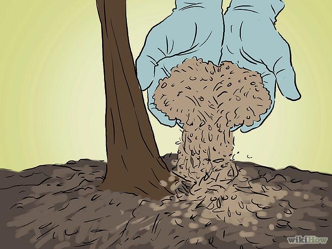 Grow an Apple Tree from a Seed Step 17.jpg