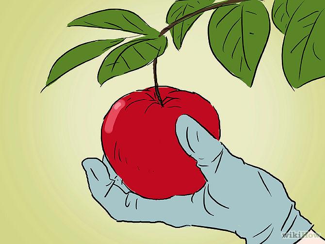 Grow an Apple Tree from a Seed Step 20.jpg